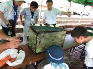 坪野川魚類調査